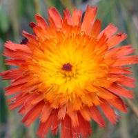 NZ wildflowers