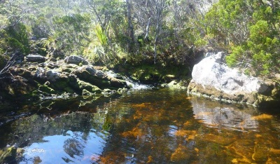 One of the pools in the creek near Mackay Hut